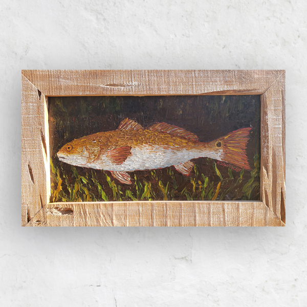 Red Drum Study 14×23 hung small